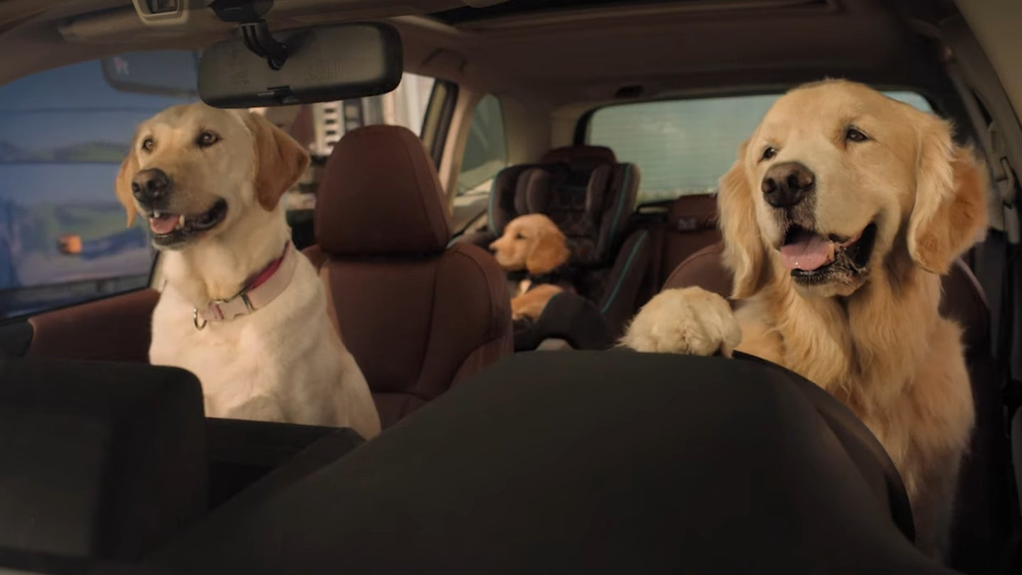 dog driving car subaru lead