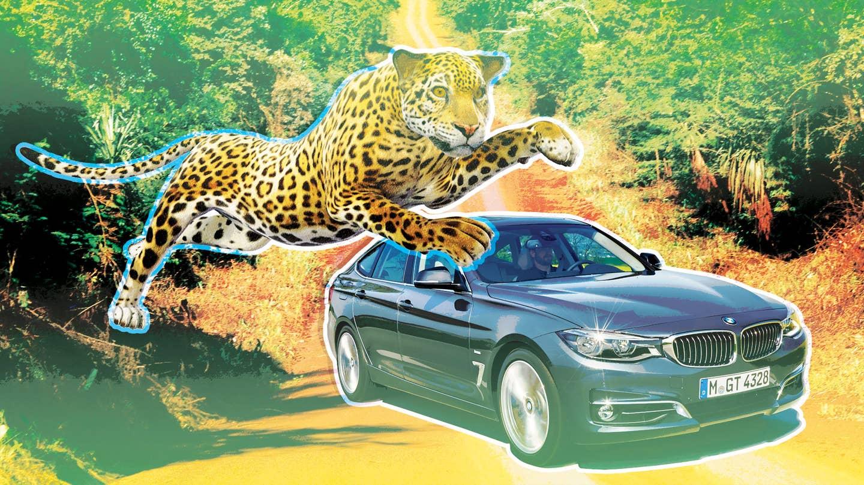 Jaguar Restores the Roar   The Drive